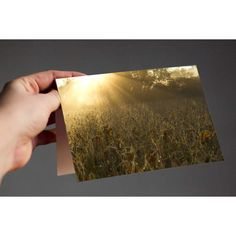 Sunbeams Over Soybeans  Do you know or love a farmer? Then this card is for them! Sunbeams Over Soybeans is our nod to the American Farmer - thank you for all that you do!  Available in multiple pack amounts, this card is 4x5.5, printed on archival, fine art Art Matte cardstock, very soft and smooth; a true experience to open. Each card is blank on the inside, and comes with white envelopes. A standard stamp will work to mail for this size card in the USA.  Make sure to explore my shop - I…