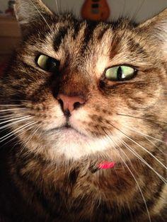 Hilarious Motivational Cat PostIt Notes Found On A Train - Hilarious motivational cat post notes found train