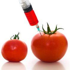 OGM e i falsi miracoli