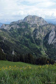 Die Raumfee: Trollblumenwiese am Branderschrofen, Allgäu