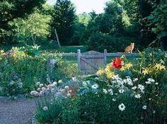 low maintenance yard design environmentally friendly wildflowers - Google Search