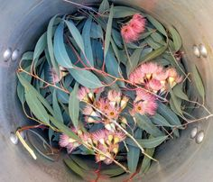 Alright so I decided to move on and make a vat of eucalyptus dye. Over the fence I went to snatch some more leaves. While I was clipping I saw some low hanging branches with flowers and pods and I … Shibori, Natural Dye Fabric, Natural Dyeing, Fabric Dyeing Techniques, Textile Dyeing, Textile Art, Dyeing Fabric, Ice Dyeing, Eucalyptus Leaves