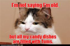 Humor Funny Memes Cat Quotes 59 Ideas For 2019 Funny Animal Quotes, Cat Quotes, Funny Animal Pictures, Funny Animals, Funny Quotes, Animal Funnies, Memes Humor, Funny Cat Memes, Funny Cats