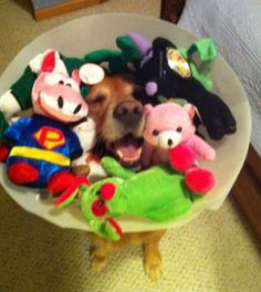 Dog Cone Full of Stuffed Animals. I can't stop laughing!