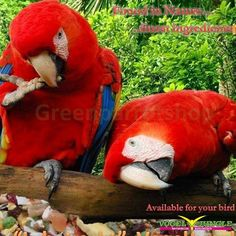 YESS.. found the best food for Macaws I ever tasted!