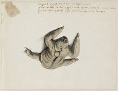 Sloth, Frans Post (1612–1680), watercolor and gouache, with pen and black ink, over graphite, c. 1638–1643, Noord-Hollands Archief, Haarlem