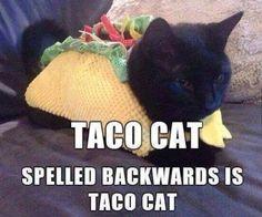Cats and Kittens @catsnkittys