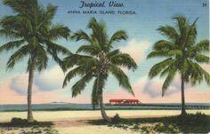 Vintage Postcard of City Pier, Anna Maria Island