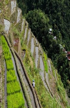 The Batad rice terraces belong to the UNESCO World Heritage Site 'Rice Terraces of the Philippine Cordilleras'. This site is located in the Philippines. Rice Terraces, Philippines, Outdoor, Outdoors, Outdoor Games, The Great Outdoors