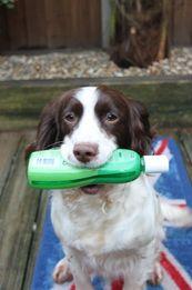 Dog Shampoo @ Beaulee Dog Grooming Norwich
