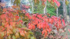 Autumn colour in Bright, Victoria Victoria, Bright, Autumn, Colour, Nature, Plants, Color, Naturaleza, Fall Season