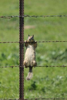 bellasecretgarden:  (via Pin by Vicki on Squirrel | Pinterest | Watch, TVs and Workouts)