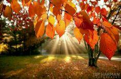 Fall mornings... ♥