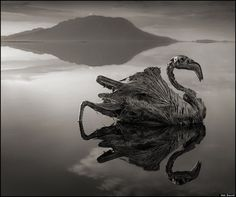 calcified flamingo, from Nick Brandt