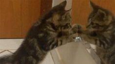 Cute cats feel - Funny Cats - brincadeiras no espelho #4