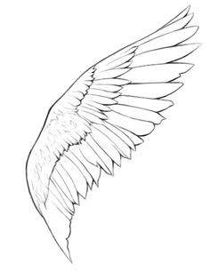 Today's Drawing Class 101: Drawing wings