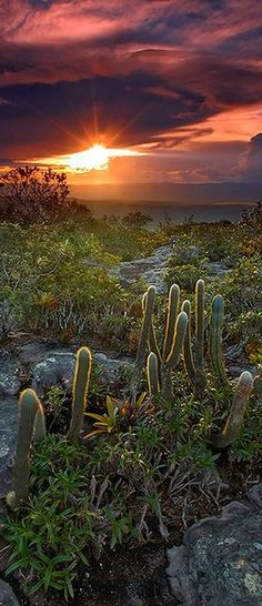Chapada Diamantina - Brazil  #nature