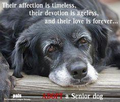 Adopt a senior dog. Golden Retrievers, Animals Beautiful, Cute Animals, Vida Animal, Schnauzers, Pugs, Old Dogs, Dog Quotes, Dog Sayings
