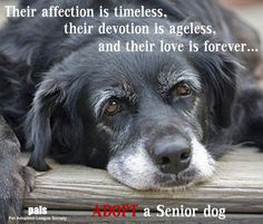 Their affection is timeless, their devotion is ageless, and their love is forever..Adopt a senior dog.