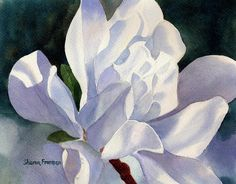 One Star Magnolia Blossom Painting by Sharon Freeman - One Star Magnolia Blossom Fine Art Prints and Posters for Sale
