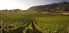 Viinitilalle Chileen - http://www.rantapallo.fi/ruoka-juomat-viinit/vieraile-chilen-viinitiloilla/