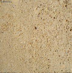 Losa piedra arenisca fósil.
