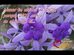 Elogio de la confianza gracias a Dios Biblia Salmo citar calcomanías de pared Calcomanías de Vinilo Casa Roo