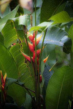 Tropical Foliage in Arenal, San Carlos, Costa Rica, Central America
