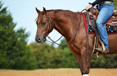 Gorgeous chestnut! Id love to ride him!