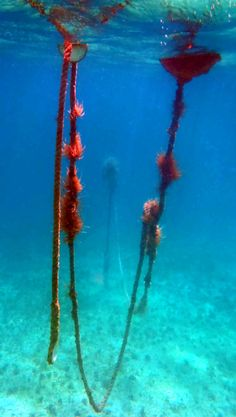 6b5d0bfbdbd Amazing what you see when you go snorkeling!  usvi  snorkelingonstjohn   stjohn