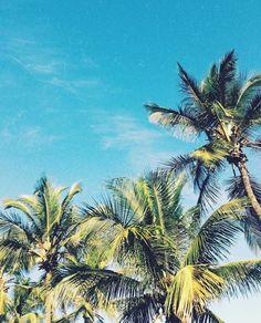 Summer Dream, Kingdom Hearts, Looking Up, Palm Trees, Nautical, Coconut, Wallpapers, Seasons, Adventure