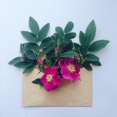 Enveloped flowers