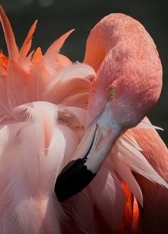 ~~Feather show ~ Flamingo by Turnpops~~