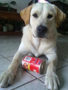 Ozzy my blonde  dog friend :-)