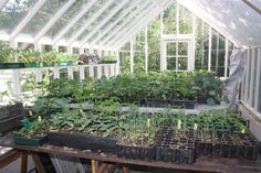 Freestanding Greenhouses for All Plants Plastic Bottle Greenhouse, Window Greenhouse, Build A Greenhouse, Greenhouse Growing, Minecraft Greenhouse, Homemade Greenhouse, Greenhouse Gardening, Plastic Bottle Flowers, Plastic Bottles