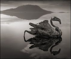 Nick Brandt  http://gizmodo.com/any-animal-that-touches-this-lethal-lake-turns-to-stone-1436606506