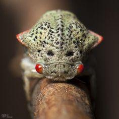 "500px / Photo ""Membracidae (young) - 17-02-2012 - MACRO"" by Luiz ..."