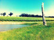 Vineyard Summer Scene. The Range, Adelaide Hills, SA.