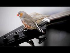 FreePort [No 007]: Céleste Boursier-Mougenot - YouTube