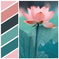 Created at Color Name Detector for iOS EFBDC3 - Baby pink D78C88 - Pastel pink 34434A - Outer Space 64A5A2 - Verdigris 2C767C - Dark cyan