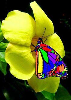 beautiful lovely things or beautiful art on world - קהילה - Google+