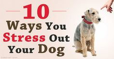 Many stress triggers in your canine companions can be avoided by insuring you are clearly communicating with your furry family member. http://healthypets.mercola.com/sites/healthypets/archive/2015/10/12/stress-triggers-for-dogs.aspx