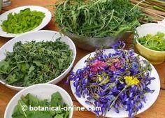 Plantas Silvestres Comestibles/Edible Wild Plants