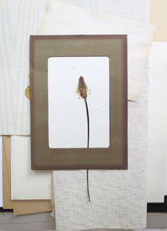 grass in a paper frame