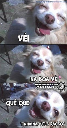 Na boa Véi I don't know Portuguese, but this dog is adorable. Animals And Pets, Baby Animals, Funny Animals, Cute Animals, Funny Images, Funny Pictures, Love Pet, Meme Faces, Best Memes