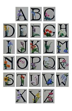 Flower ABC's Botanical Alphabet 11x17 print of by Nonfictional, $26.00