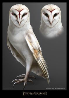 legend of the guardians character Creature Drawings, Animal Drawings, Owl Drawings, Fantasy Creatures, Mythical Creatures, Guardians Of Ga'hoole, Owl Artwork, Owl Pictures, Beautiful Owl