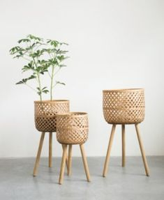 Positioned on solid wood dowel legs, the Studios Round Bamboo Floor Baskets with Wood Legs - Set of 3 gives a nod to mid-century modern design. Plant Basket, Bamboo Basket, Basket Planters, Wicker Baskets, Baskets For Plants, Bamboo Planter, Picnic Baskets, Deco Restaurant, Bamboo Furniture