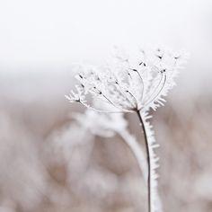 Winter frost - flower