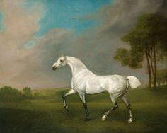 George Stubbs, A Grey  horse